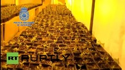 Spain: 340kg of cannabis and three guns uncovered during warehouse raid