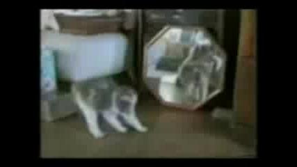 Много Смях С Котки