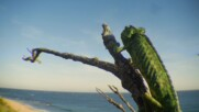 Срадиземноморският хамелион