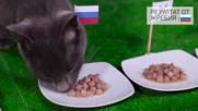 Домакинът Русия с решителна победа според котето-оракул ВладИмир