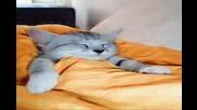 Спящи Котета
