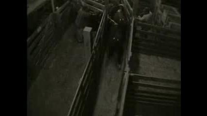 Шокиращи кадри от животновъдни ферми! Meet your Meat