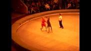 Кенгуру пребива човек в цирка.бокс с кенгуру.