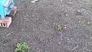 video-1462986816