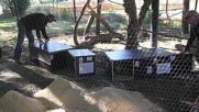 Georgia: Tbilisi Zoo receives 22 donated animals from Europe after flooding