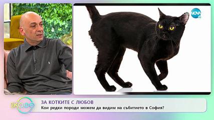 """За котките с любов - """"На кафе"""" (21.02.2020)"""
