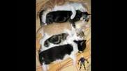 Смешни Котки (част 5)