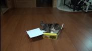 Котето Мару и многото кутии ..