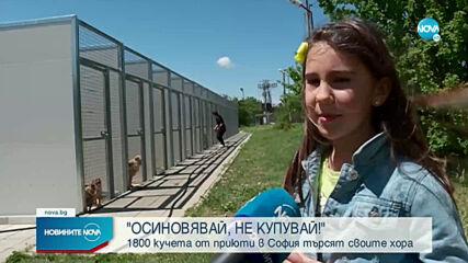 1800 кучета от приюти в София търсят осиновители