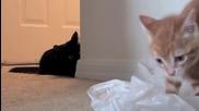 Котенце, котарак и найлонова торбичка