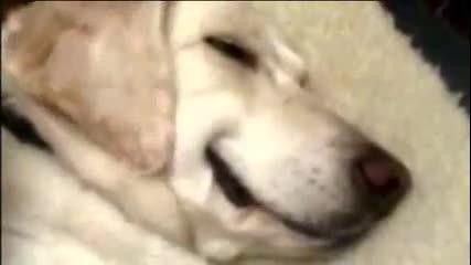 Кучета се усмивхат в реклама на Pedigree