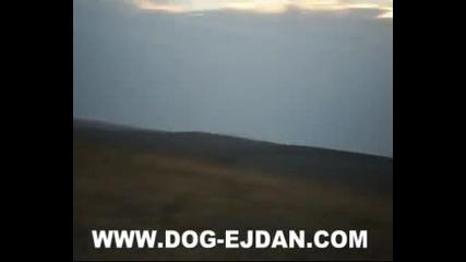 Kopoy 3 www.dog - ejdan.com