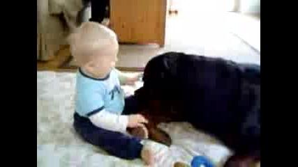 Ротвайлер Си Играе С Бебе