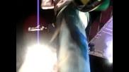 Destra And Sean Paul Part Three