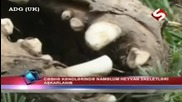 Мистерия: Скелет на неизвестно животно в Азърбайджан