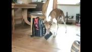 Куче крадец...