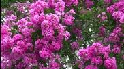 Beautiful Flowering Trees