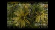 Песента от Седемнайсет мига от пролетта ( Превод )