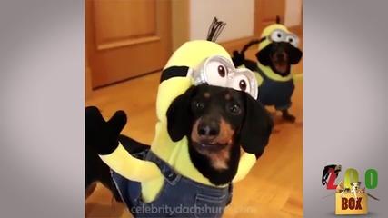 Супер смешни животни в костюми! Пробвай да не се засмееш! :D
