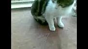 Glupavo Kote.3gp