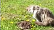 Котка Унижи Къртик