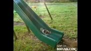 Котки на пързалка - голям смях