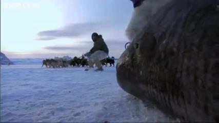Лов на акули в Антарктида