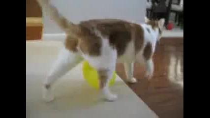 Наелектрезирана котка
