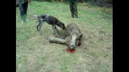 баро хапе диво прасе 2