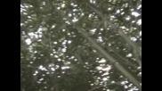 В Бамбуковата Горичка - 3