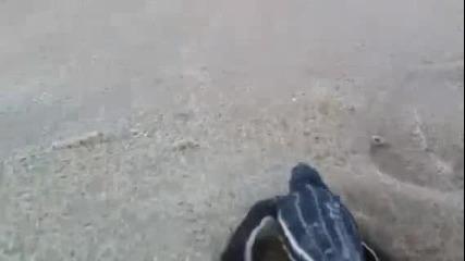 Водна костенурка се връща в Океана