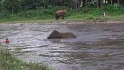 """Реакцията на млад слон, когато вижда """"давещия"""" си дресьор!"""