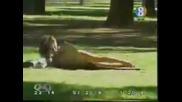 Лудо Куче Си Играе В Парка като ближе Мацките по ...