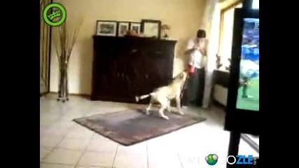 Всички мразят вувузелата дори и кучетата!