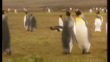 Влюбени животни