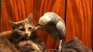Забавна Компилация - Папагал и Котка ( 2014 )