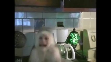 Тази маймунка полудя