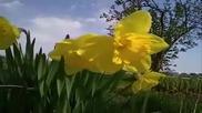 Рпк - Пчели - Пестициди - Цветя