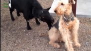Top 10 Funny Animal Videos Compilation 2014