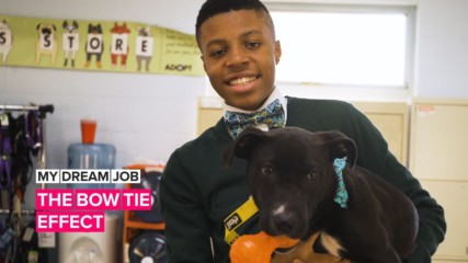 My Dream Job: A dash of bow tie dapperness for shelter dogs