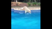 Куче плува на сухо