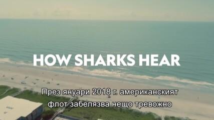 Как чуват акулите