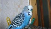 Много умен папагал