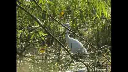 Природен Резерват Сребърна
