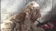 Добри хора спасяват куче от улицата