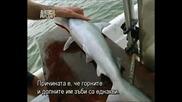 Бичата акула - най опасната в света - BG subs част 1/3