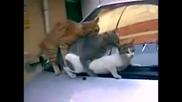 Котета прават троика ...:д смях