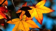 Mantovani And His Orchestra - Autumn Leaves 1970