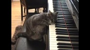 Nora The Piano Cat?