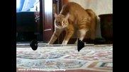 Коте изчезва с финес 3 (new version) Thriller Cat